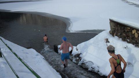 Prieskum o otužovaní ľadových medveďov